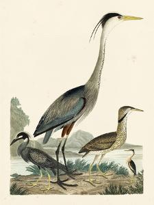 Heron Family I by A^ Wilson