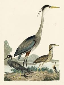 Heron Family I by A. Wilson