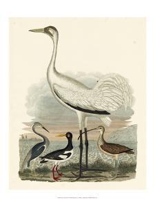 Heron Family III by A^ Wilson