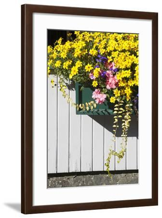 A Window Box Filled with Cascades of Flowers-Gabby Salazar-Framed Photographic Print
