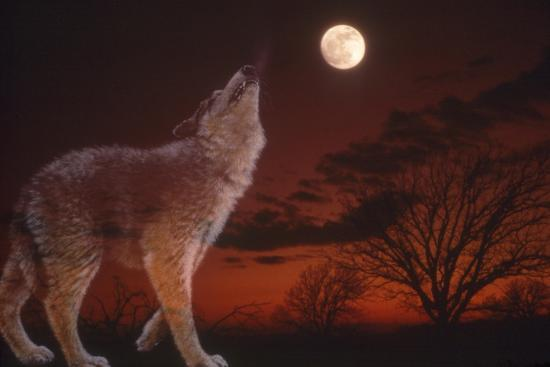 A Wolf Howling with Full Moon in the Sky-Gordon Semmens-Giclee Print