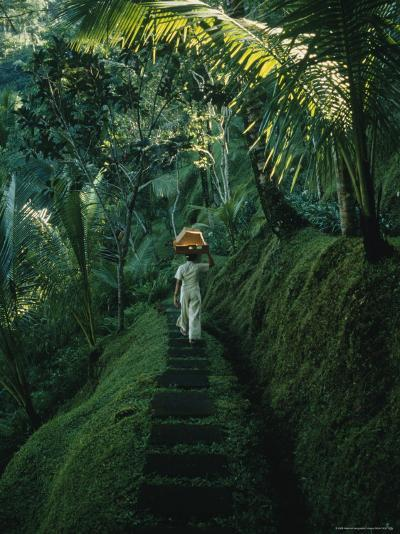 A Woman Carries Food Baskets on Her Head Under Tropical Trees--Photographic Print
