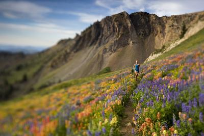 A Woman Enjoys a Morning Trail Run in a Meadow of Wildflowers at Snowbird Ski and Summer Resort, Ut-Adam Barker-Photographic Print