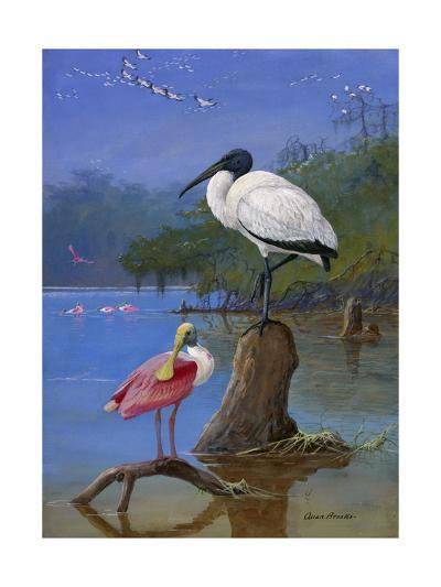 A Wood Ibis Perches with a Roseate Spoonbill on Dead Tree Limbs-Allan Brooks-Giclee Print