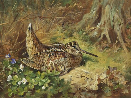 A Woodcock and Chicks-Archibald Thorburn-Giclee Print