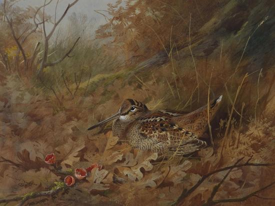 A Woodcock Nesting in Autumn Leaves-Archibald Thorburn-Giclee Print