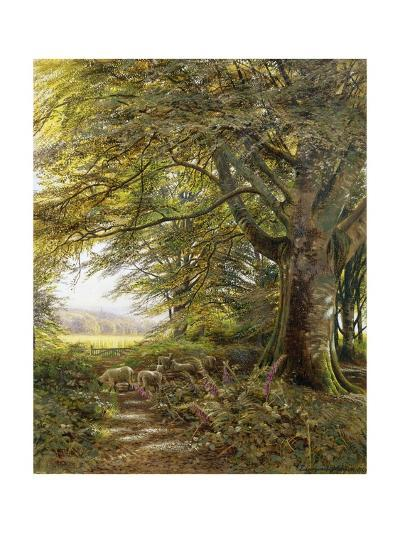 A Wooded Landscape with Foxgloves-Edmund George Warren-Giclee Print