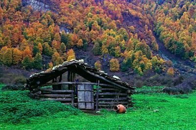 A Wooden Hut in an Autumn Landscape of Colorful Maple Trees in the Dohezar Forest-Babak Tafreshi-Photographic Print