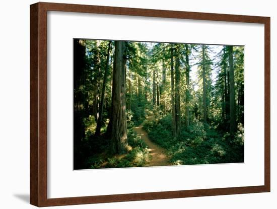 A Woodland Path Winds Through a Grove of Sequoia Trees in Long Meadow Sequoia Grove-James P. Blair-Framed Photographic Print