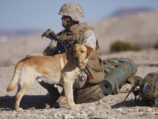 A Yellow Labrador Retriever And His Handler Take a Break in the Desert-Stocktrek Images-Photographic Print