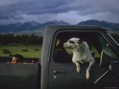 A Young Boy and His Dog Ride in His Grandfathers Truck-Joel Sartore-Photographic Print
