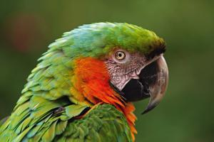 Macaw by aaa