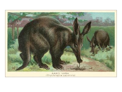 Aardvarks--Art Print