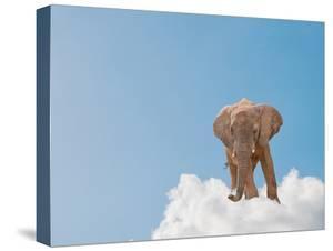 Elephant On Cloud In Sky, Outdoor by Aaron Amat
