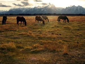 A Herd of Horses Grazing in a Field by Aaron Huey