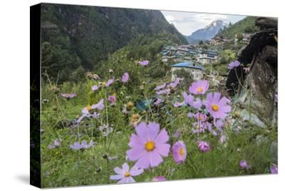 Cosmos Flowers Outside the Village of Monjo