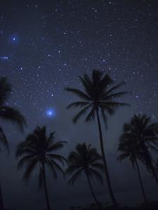 Palm Trees on a Beach Silhouetted Against a Starry Sky by Aaron Huey