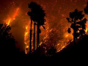 The Yorba Linda-Corona Fire Rages Behind Palm Trees in Carbon Canyon by Aaron Huey