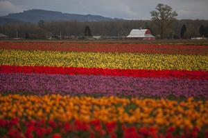 Color Field by Aaron Matheson