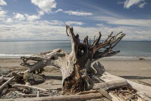 Driftwood by Aaron Matheson