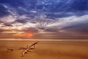 Golden Beach by Aaron Matheson