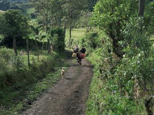 Dog Leads the Way for Donkey and Keeper, Near Cotopaxi Volcano, Ecuador, South America by Aaron McCoy