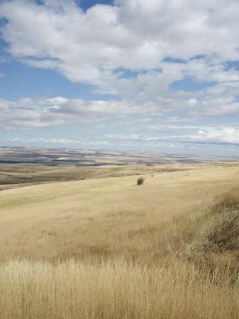 Farmland Off Highway 84, Near Pendleton, Oregon, United States of America, North America