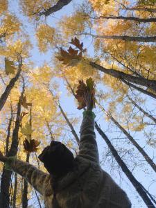 Girl Throws Leaves in the Air to Celebrate Autumn, Vashon Island, Washington State by Aaron McCoy