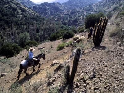 Men on Horseback Carry Supplies to Cattle Ranch on the Outskirts of Santiago, Chile, South America