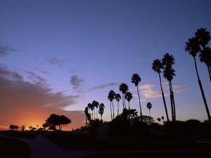 Palm Trees in Silhouette in Park on Bluff Overlooking the Pacific Ocean, Santa Barbara, California by Aaron McCoy