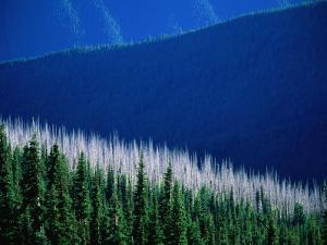 Sunlight and Shadow Over Forests and Mountains Seen from Deer Park Lookout, Olympic National Park by Aaron McCoy