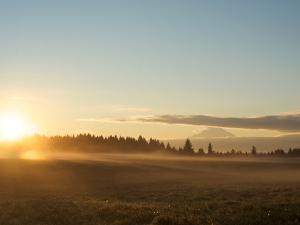 Sunrise on Field of Green Grass with Douglas Firs and Mount Rainier, Vashon Island, Washington, USA by Aaron McCoy
