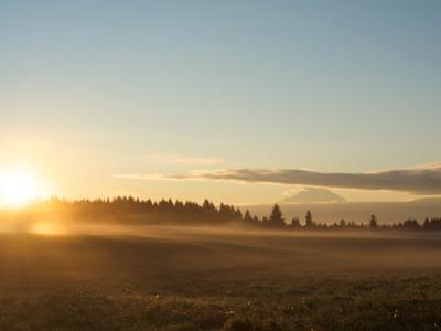 Sunrise on Field of Green Grass with Douglas Firs and Mount Rainier, Vashon Island, Washington, USA