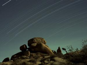 Time Exposure at Night, Joshua Tree National Park, California by Aaron McCoy