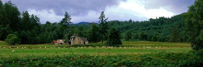 Abandoned Farmhouse with Sheep Glen Strathfarrar Highlands Scotland--Photographic Print