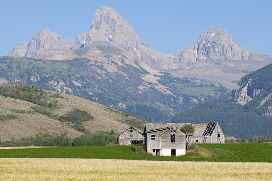 Abandoned Farmhouses and Wheat Fields in Front of the Teton Range  Photographic Print by Rich Reid | Art com