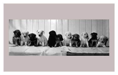 Abandoned Pups--Art Print