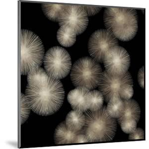 Pewter Sunbursts by Abby Young