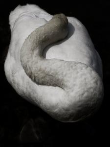 A Sleeping Swan by Abdul Kadir Audah