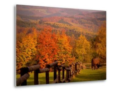 Autumn Scenery with Horses Grazing and Corral, Germany