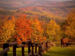 Autumn Scenery with Horses Grazing and Corral, Germany by Abdul Kadir Audah