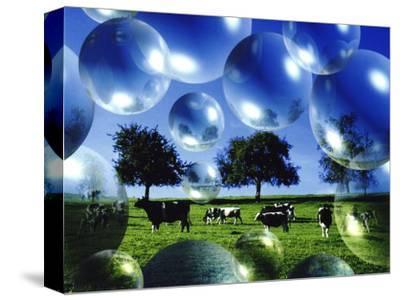 Bubble Pasture, Bergisch Land, Germany