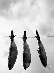 Drying Sardines on Clothesline by Abdul Kadir Audah
