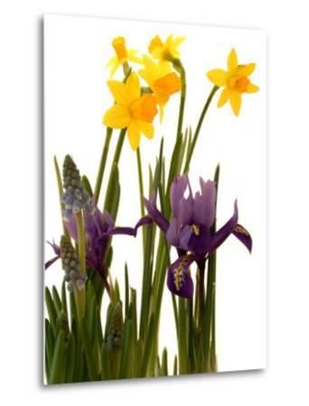 Spring Flowers: Daffodils, Iris and Muscari