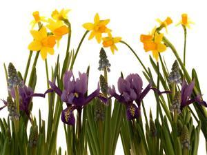 Still Life Photograph, a Collection of Spring Flowers in One Frame by Abdul Kadir Audah