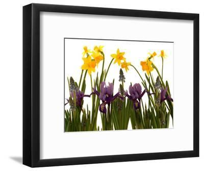 Still Life Photograph, a Collection of Spring Flowers in One Frame