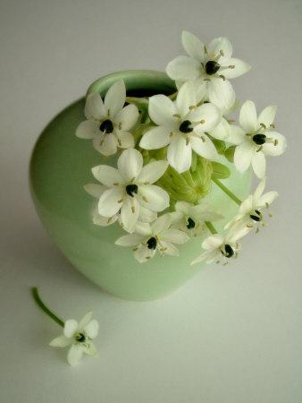 Still Life Photograph, a Green Vase with Ornithogalum Flowers