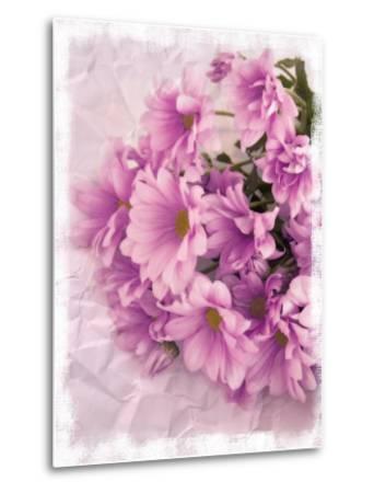 Still Life Photograph, Chrysanthemum Flowers