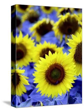 Sunflowers Closeup