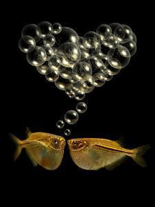 Tetra Fish Blowing Bubbles in Heart Shape by Abdul Kadir Audah